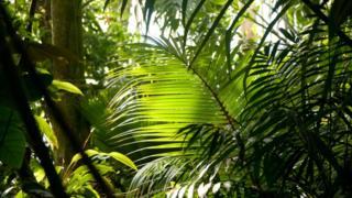 Plants in Kew Palm House