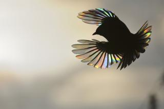 Rainbow wings by Victor Tyakht, Russia