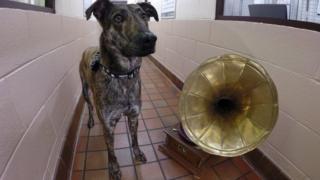 Dog beside gramophone
