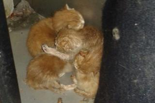 Kittens in tumble dryer
