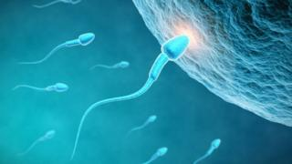Sperm travels toward the egg