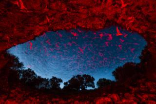 En la noche por Karine Aigner, EE.UU.