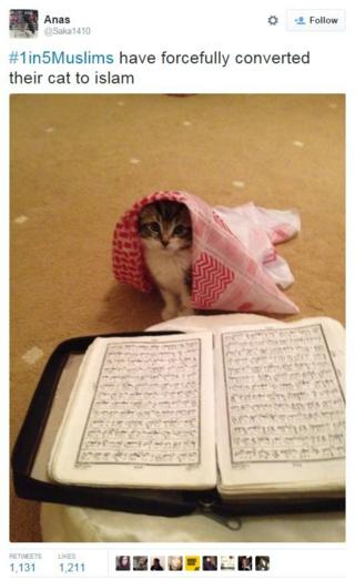 #1in5Muslims post about how a pet cat was forcibly converted to Islam