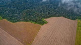 Aerial view of devastation in the Amazon