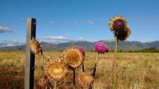 Alambrado con cardos, Patagonia Artentina