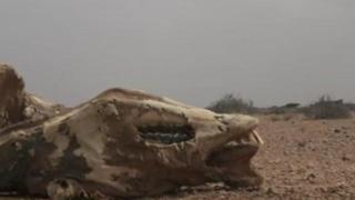 Le bétail succombe également à la pénurie d'eau