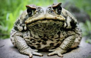 A close-up picture of a shaft toad