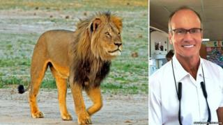 Cecil the lion (left) and Walter Palmer, the US dentist who killed the animal