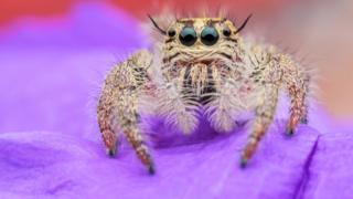 _93278316_spiderfemalehyllusdiardiorjump
