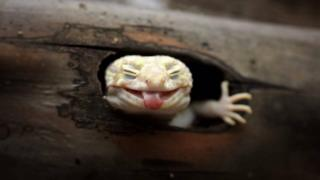 Wildlife photograph of a gecko by Muhammad Roem