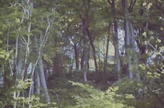 Trees at Castell Coch