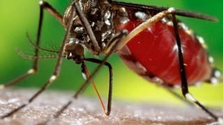 Le moustique vecteur de la dengue pique surtout pendant le jour.