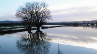 Two large trees are reflected in the water logged fields below.
