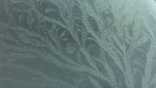 Frost on a car windscreen has formed a pattern a bit like wheat branches.
