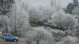 A view of a residential street. All of the trees are white, covered in frost. The sky is light grey.