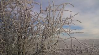 Branches in the left foreground have a thick layer of frost on them. Behind is a view of fields.