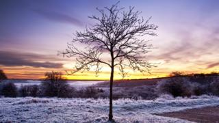 A tree is in the middle of the picture. The surrounding fields are dusted in frost. Behind, the cold looking sky is turning yellow in the sunrise.