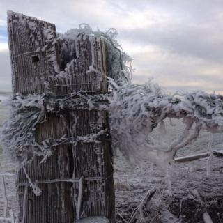 A fence post and barbed wire is covered in frost.