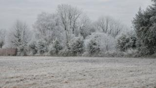 A field and trees behind it are white, having been covered in frost.