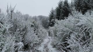A low down shot of a country path, trees and bushes either side. The whole scene is covered in snow.