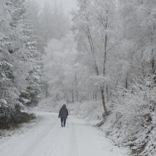 A woman walks on the road in the falling snow. Either side are tall trees, all white in the snow.