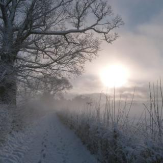 A shot of a country road next to a field, with large trees. The whole scene is white in frost and snow and there is a mist with the sun haze shining through it.