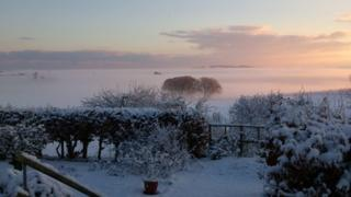 A light pink fog on the horizon engulfing the trees. In the foreground is a garden with bushes, covered in snow.