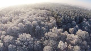 A birds eye view of a forest. The trees are white in snow and frost.