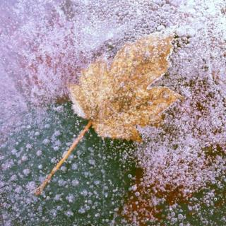 A frozen yellow brown leaf in water. Red and green colours are around it.