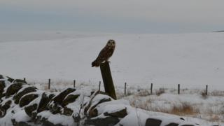 An owl is perched on a stump that is leaning up against a stone wall. Behind is white - fields covered in snow.