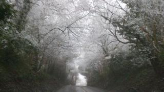 Frost trees lean over a road creating a white and green tunnel.