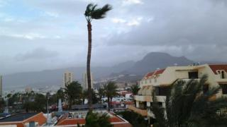 Palm tree leaves being blown around in the wind. Dark grey clouds in the sky above.