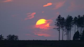 A bright yellow sun in a dark purple sky is setting behind silhouetted tall trees. Pink cloud swirls around the sun.