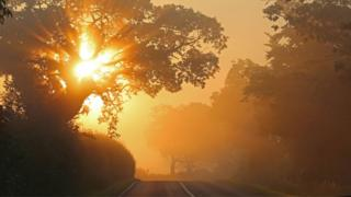 The sun shines through mist onto a country road.