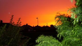 An orange and pink sky over houses and streetlamps. Green plants frame the bottom corners of the picture.