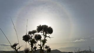 A halo of light around the sun. A thistle in the middle of the picture, covering the sun.