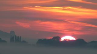 A huge sun rising into a pink and yellow cloudy sky. Trees in front of the sun.