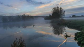 A lone swan swims on a misty river.