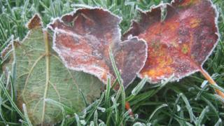 A close up of frosted leaves and grass.