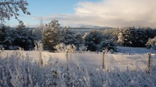 Snow on trees and fences. Large cloud in the sky in the distance.