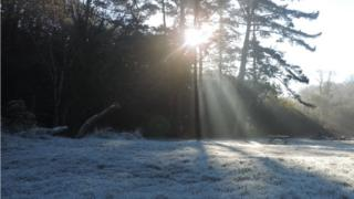 Frost on grass in the foreground. Sunlight streams through the trees above.
