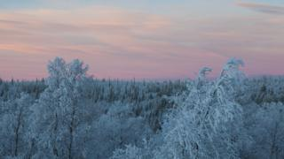 A top-shot of a snow covered forest with a pale pink sky behind.