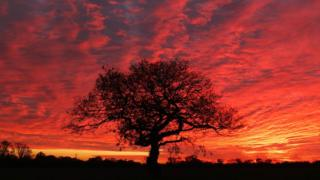 A silhouetted tree stands in front of a flaming pink and orange cloudy sky.