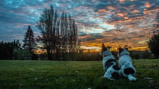 Two small dogs sitting in the foreground, look out to a yellow and blue sunset. Trees break up the sky.