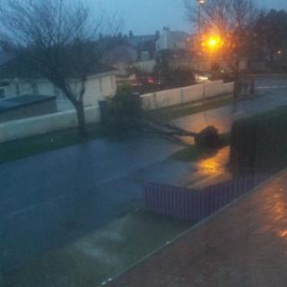 A tree has fallen across an empty road.