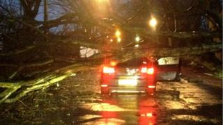 A tree has fallen on the roof of a car. The driver's door is open.