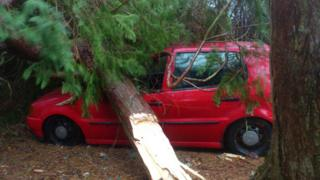 A red car has been crushed at the front by a huge tree that is lying on it.