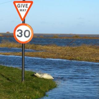 Water surrounds grass verges. A road sign indicates the 30mph speed limit and says 'give way'. A seal pup is at the bottom of the road sign.