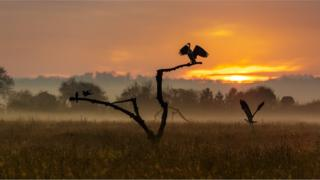 Herons and magpies in a field. A branch in the centre with birds on it. Mist and an orange sunset are behind.