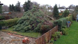 A large tree has fallen across a garden.